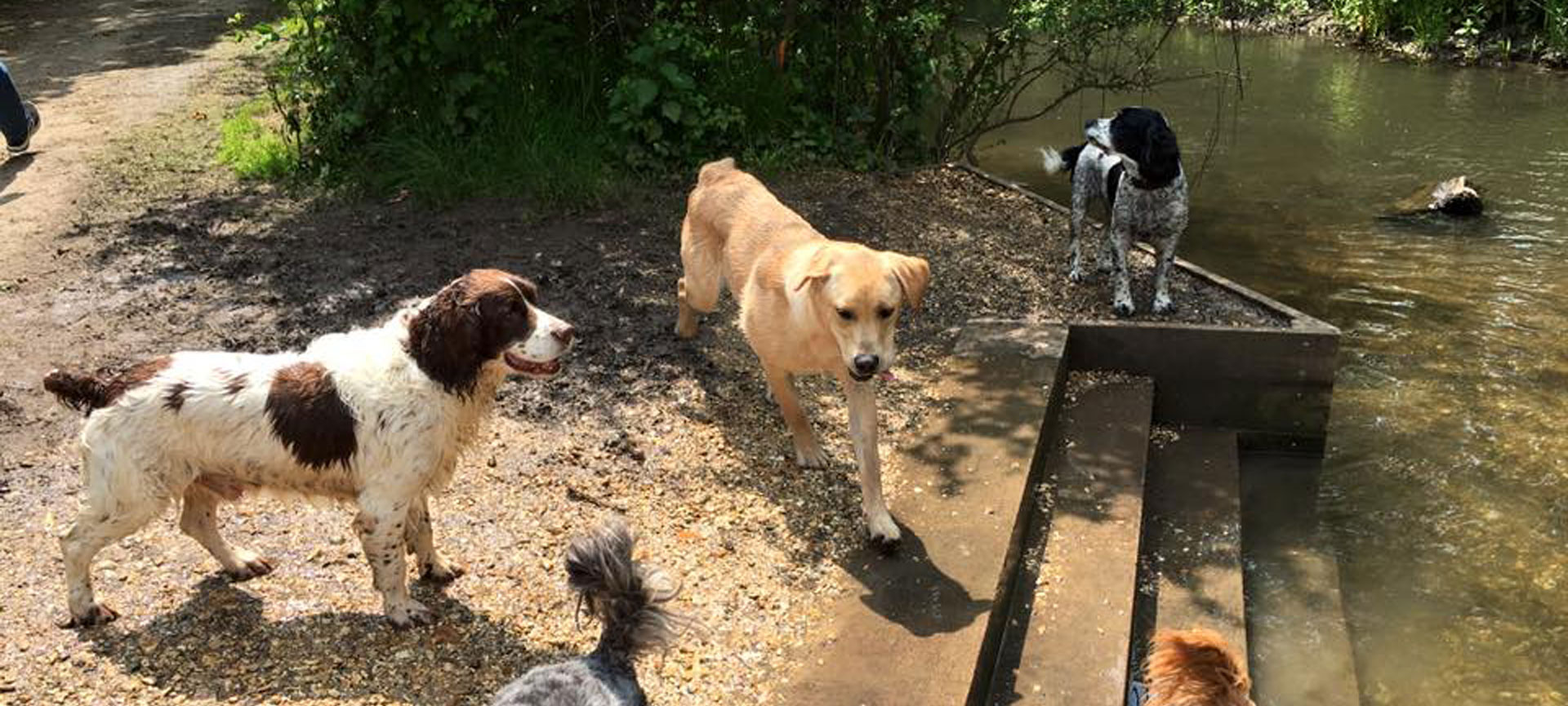 Dog walking in Warsash, Titchfield and the surrounding area